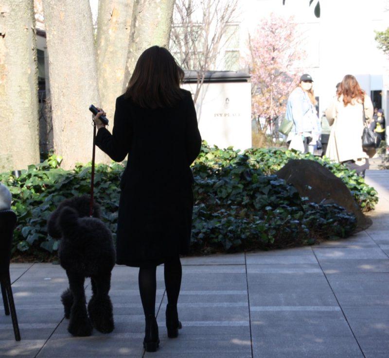 Tokyo : Tenir son chien en laisse
