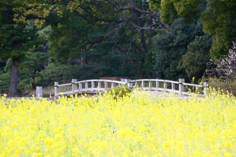 Paysage coloré au jardin Hama Rikyu