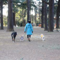 Vivre avec son chien à Tokyo, expatriation à Tokyo