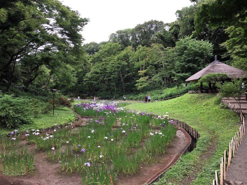 jardin-des-iris-meiji-jingu-gyoen-tokyo-copyright-helene-marbach
