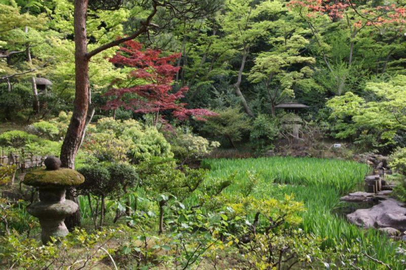 Le jardin du musée Nezu -TokyoLe jardin du musée Nezu -Tokyo