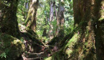 yakushima japon weekend de 3 jours visiter le japon copyright vivre a tokyo