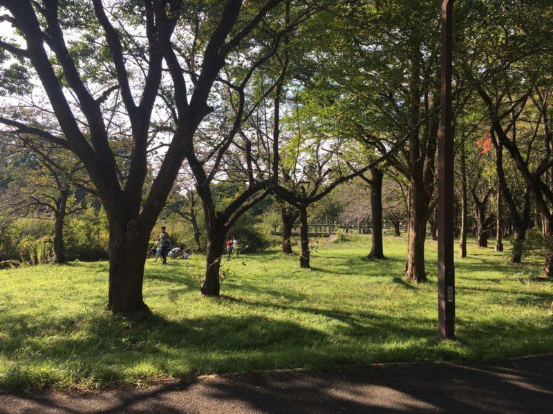 les petits chemins du parc Mizumoto Koen, Tokyo © Vivre à Tokyo