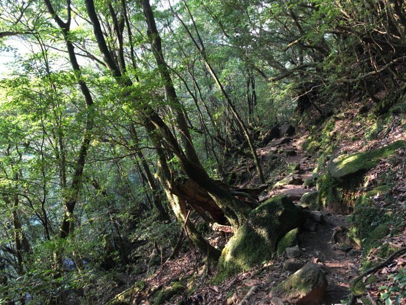 Yakushima Shiratani Unsuikyo weekend by vivre a tokyo