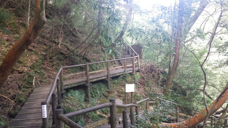 yakusugiland yakushima by vivre a tokyo