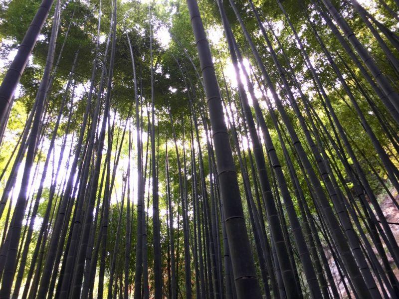 Les bambous du Hokokuji à Kamakura, vivre à tokyo, expatriation à tokyo, visiter kamakura, visite guidée