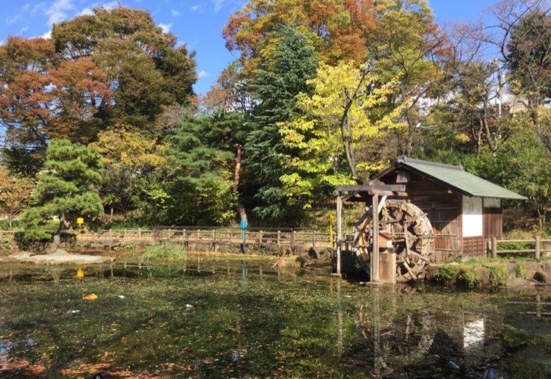 Le parc Nabashimashoto, Shibuya, Visiter Tokyo et le Japon