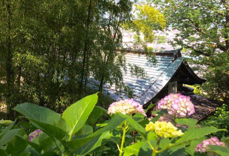 Les hortensias au temple Hasedera, Visiter Tokyo et le Japon