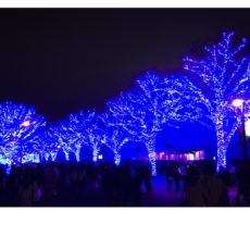 Blue Cave à Shibuya, visiter tokyo, vivre à tokyo, expatriation à tokyo