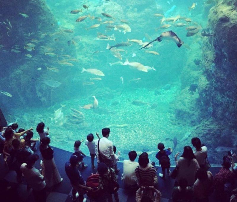 L'aquarium d'Enoshima, Visiter Tokyo, vivre a tokyo, enfant a tokyo