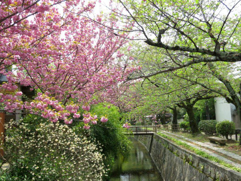 chemin de la philosophie Kyoto visiter le japon découvrir le japon visiter Kyoto nos incontournables