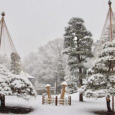 Le parc Yoyogi sous la neige, les arbres avec les supports d'hiver, l'hiver à Tokyo