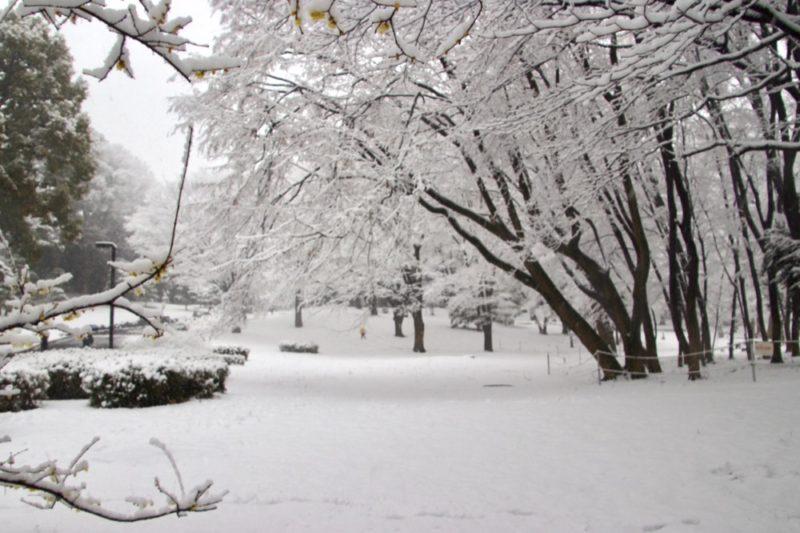 Le parc Yoyogi et les cerisiers sous la neige , l'hiver à Tokyo