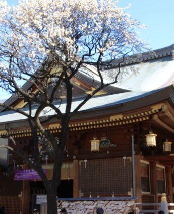pruniers tokyo sanctuaire yushima tenjin okachimachi ueno tokyo visiter tokyo visiter japon