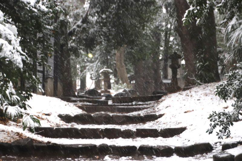Le sanctuaire Yoyogi Hachiman, Vivre à Tokyo
