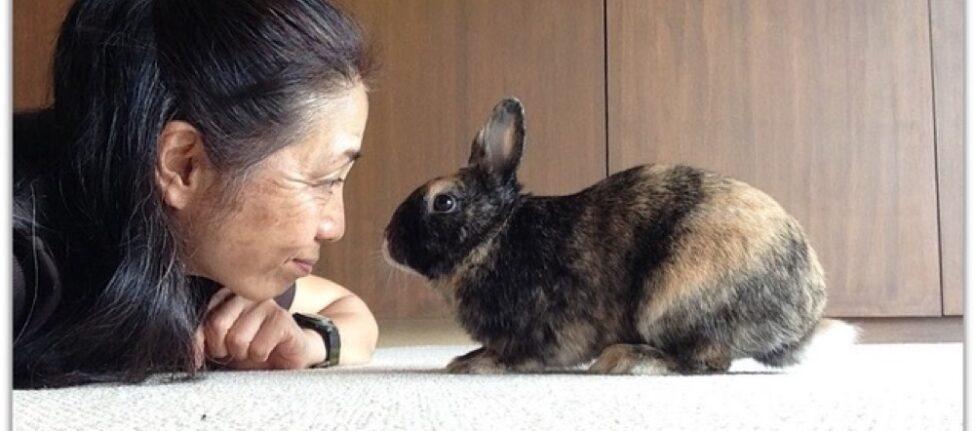 Pet sitter à Tokyo, Vivre à Tokyo