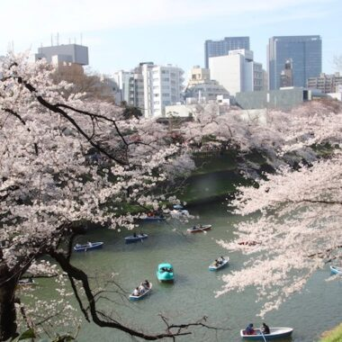 visiter tokyo lors des cerisiers en fleurs, vivre a tokyo