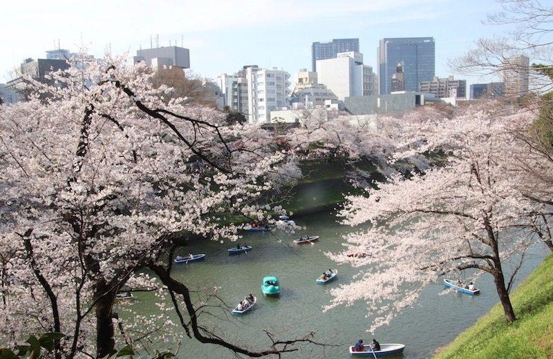 Les douves de Chidorigafuchi, Sakura, Visiter Tokyo et le Japon