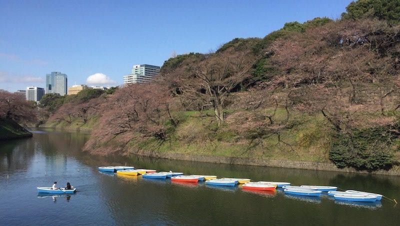 Balade à la veille des Sakura à Tokyo, visiter Tokyo, expatriation à Tokyo