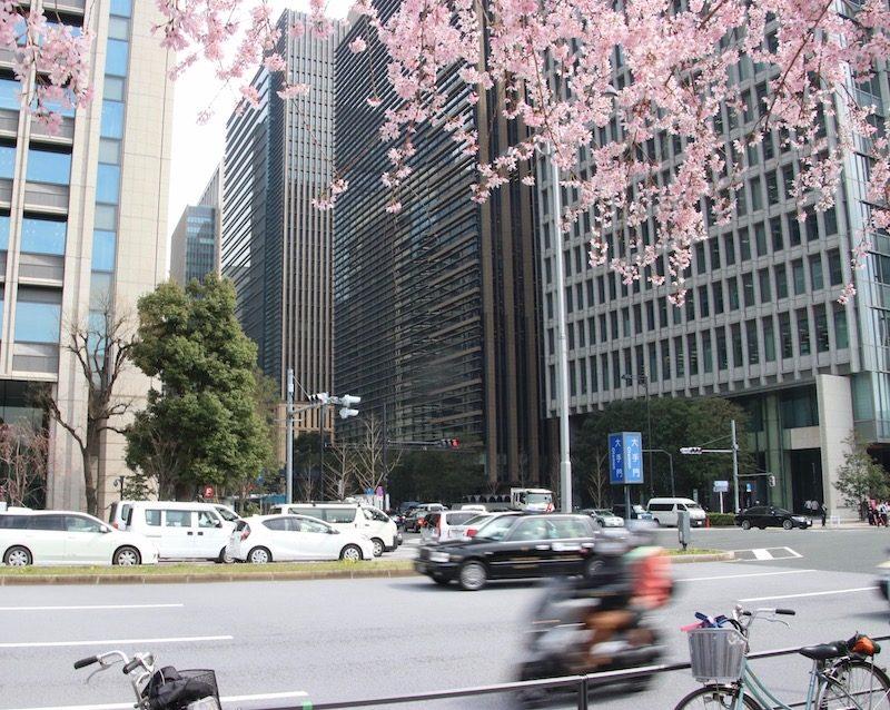 Les cerisiers en fleurs dans la ville, Marunouchi, Vivre à Tokyo