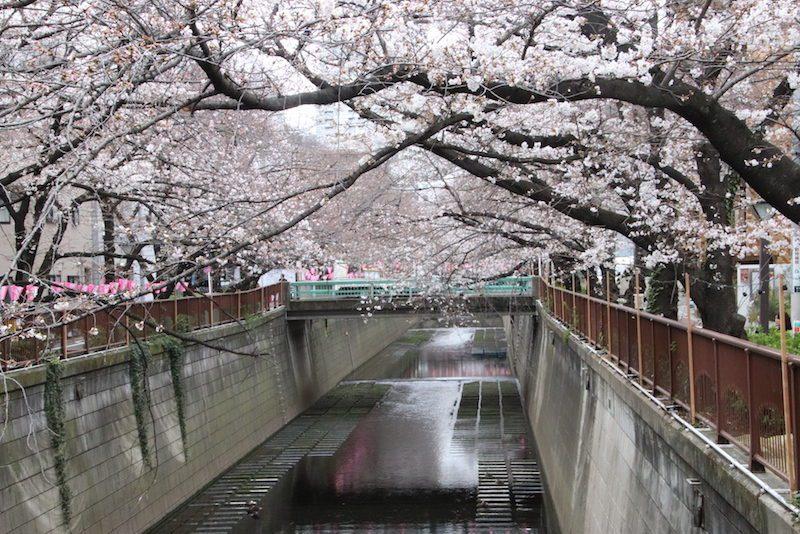 Le canal de Naka Meguro, Vivre à Tokyo, Visiter Tokyo