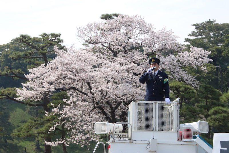 La visite du Palais impérial, Sakura, Visiter Tokyo et le Japon