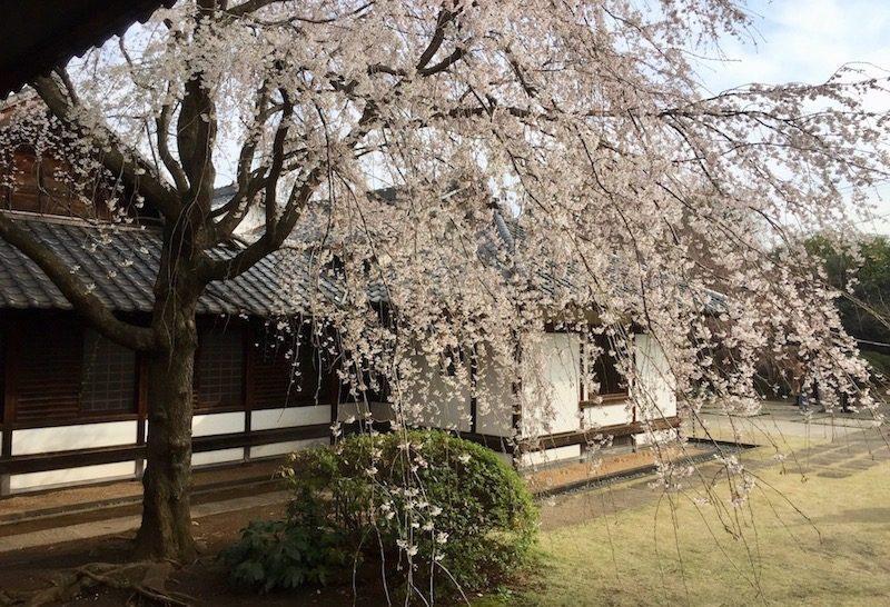 Le temple de Tennoji à Yanaka, Visiter Tokyo et le Japon