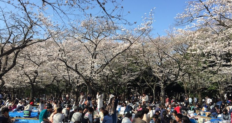 Hanami au parc Yoyogi, Vivre à Tokyo, Visiter Tokyo et le Japon