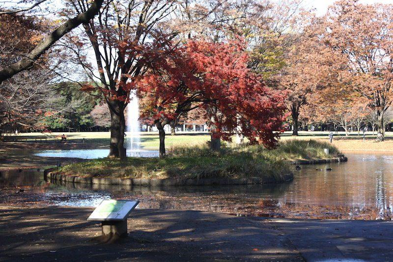 le parc Yoyogi en automne, vivre à tokyo, expatriation à tokyo