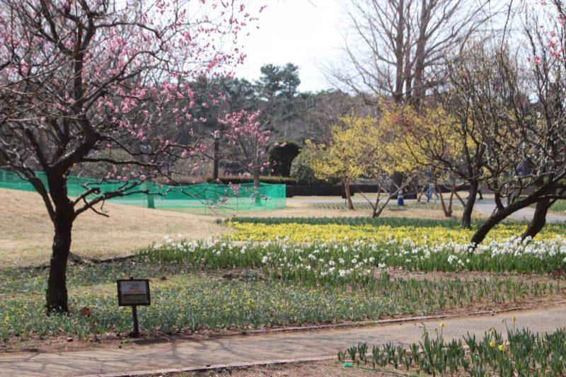 Le parc Hitachi Seaside, visiter tokyo et le japon, vivre à tokyo