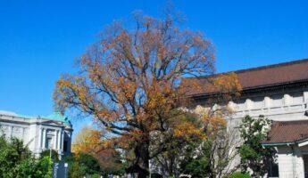 Tokyo National Museum, tokyo museum, ueno, ueno park, visiter tokyo, vivre a tokyo, expatriation tokyo