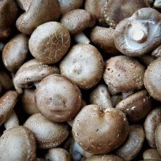 shiitake, champignons japonais, champignon japon, cuisine japonaise, recette japon, vivre a tokyo, français a tokyo, recette champignon japon