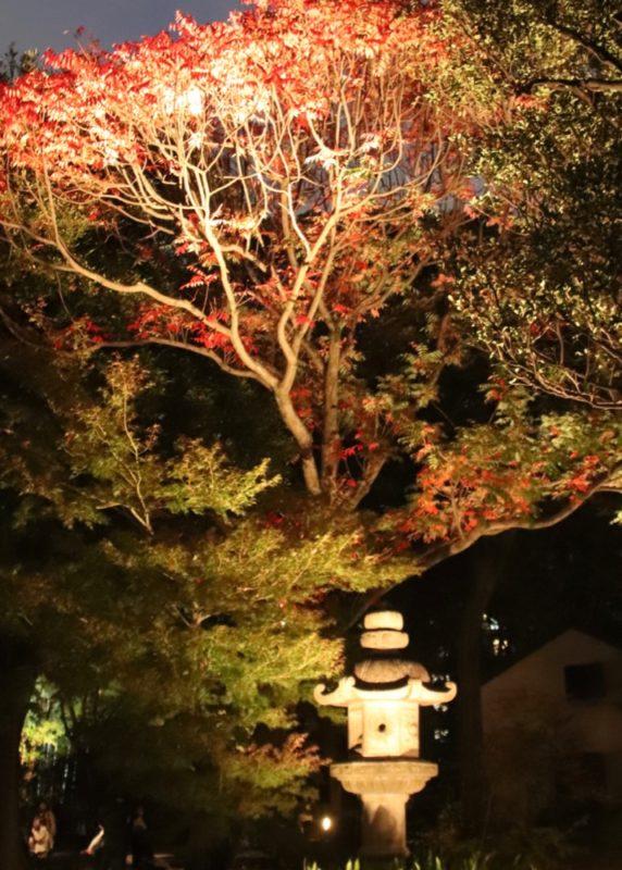 jardin rikugien, illumination a tokyo, visiter tokyo, vivre a tokyo