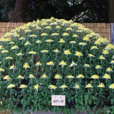 Le parc Shinjuku Gyoen et les chrysanthèmes, vivre a tokyo, vivre a tokyo, expatriation a tokyo
