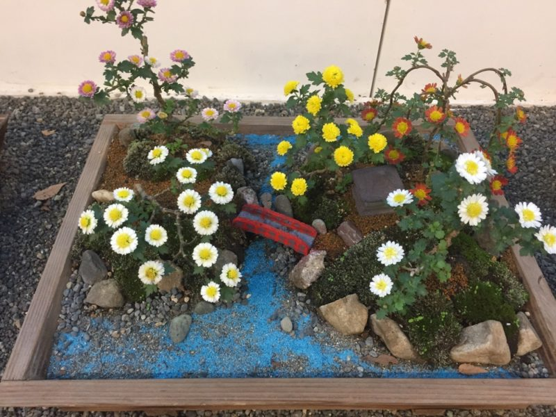 chrysanthèmes au sanctuaire Meiji Jingu, vivre à tokyo, expatriation a tokyo, visiter tokyo