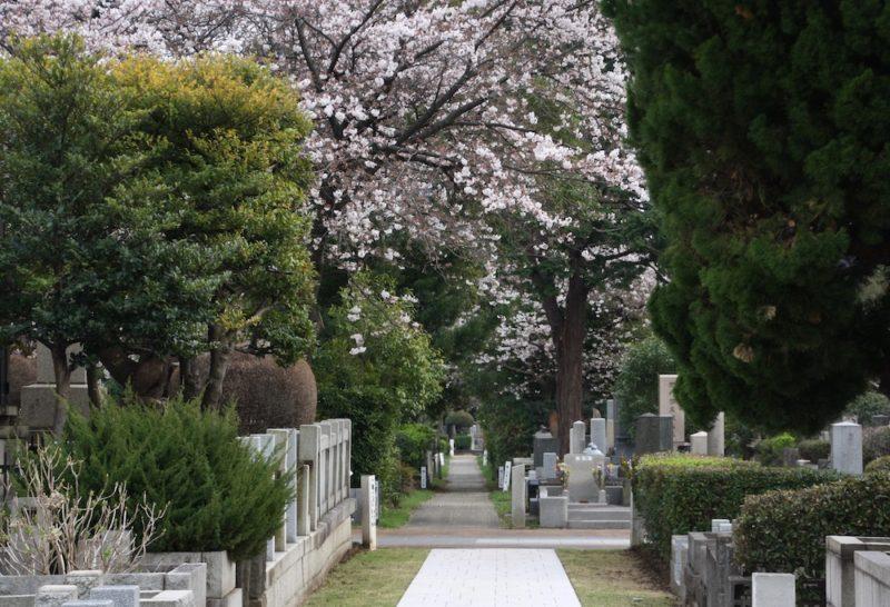cerisiers en fleurs, cimetière d'aoyama, visiter tokyo, vivre a tokyo