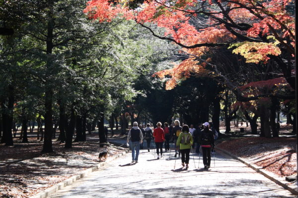 tokyo-automne-yoyogi
