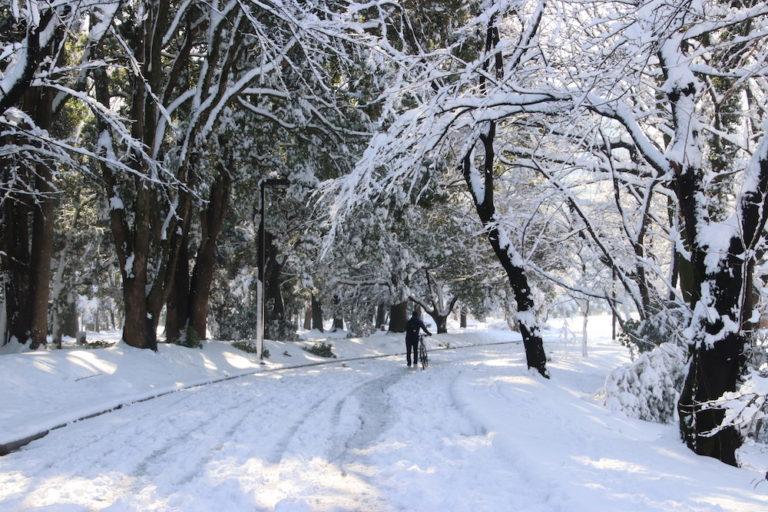 tokyo-neige-yoyogi