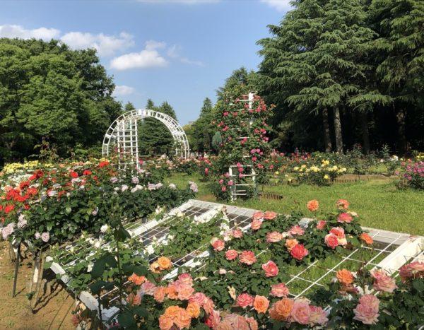 parc yoyogi, visiter tokyo, vivre a tokyo, jardin à tokyo