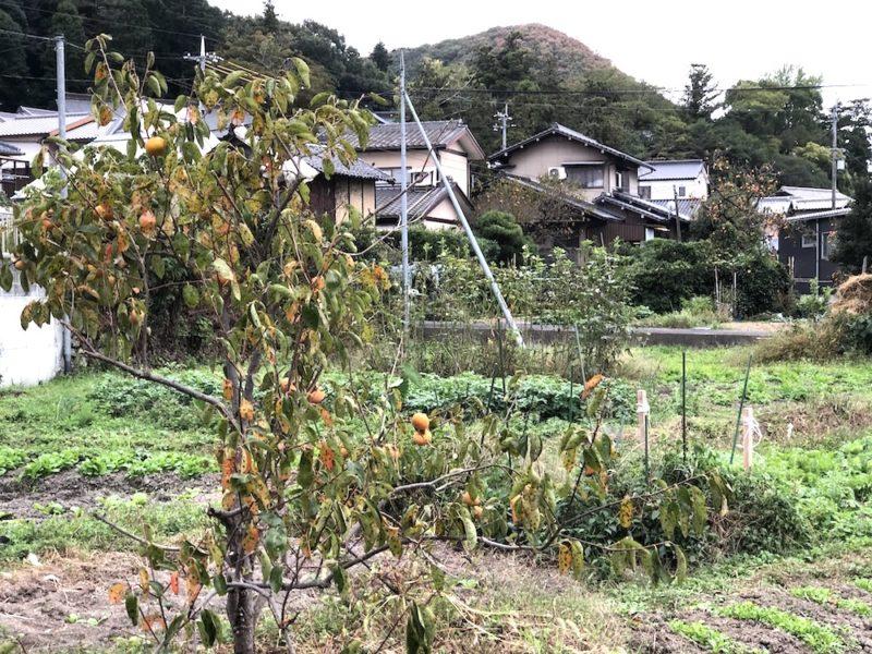 visiter le japon, la campagne japonaise