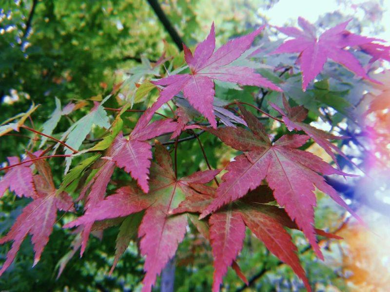 kibune, visiter kyoto, voyage au japon