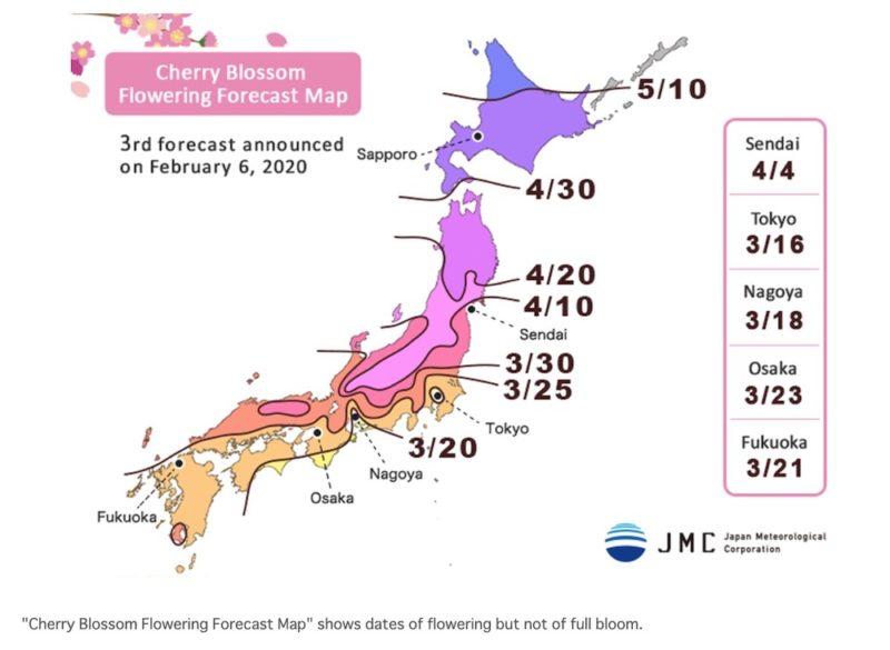infos pour visiter tokyo, vivre a tokyo, sakura blossom