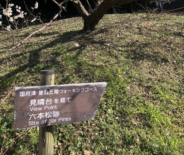 vivre à tokyo, excursion à la journée, visiter tokyo
