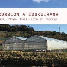 tsukuihama, la serre à la ferme, vivre à tokyo, excursion