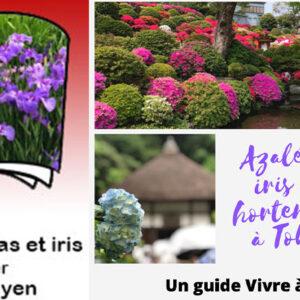 guide de tokyo, visiter tokyo, azalées, vivre a tokyo