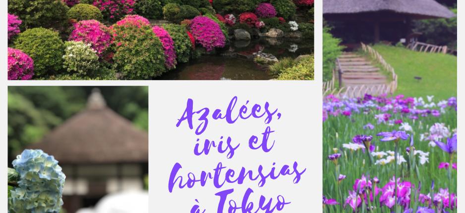 fleurs, vivre à tokyo, iris, hortensia, azalée