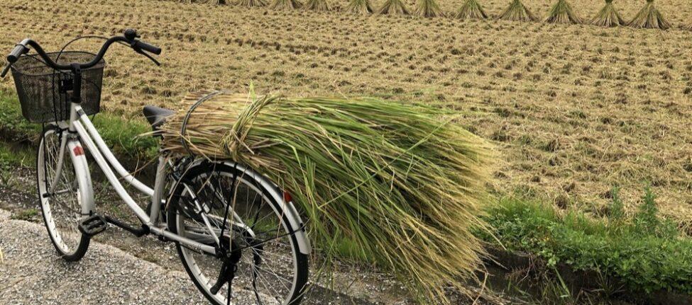 faire du vélo au Japon, visiter le japon, pocket wifi