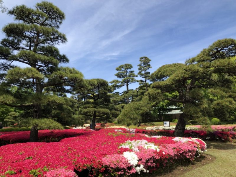 visiter tokyo, vivre a tokyo, jardin impérial