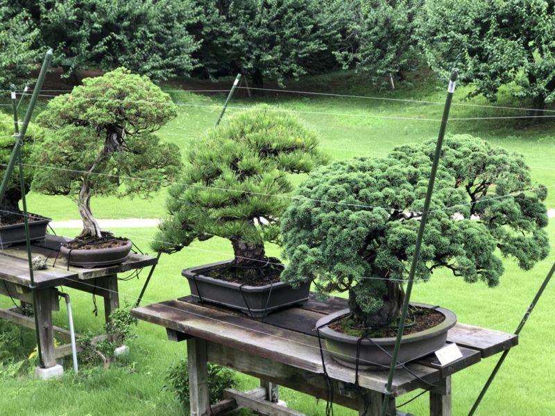 tokyo, palais du Prince, visiter tokyo, vivre a tokyo
