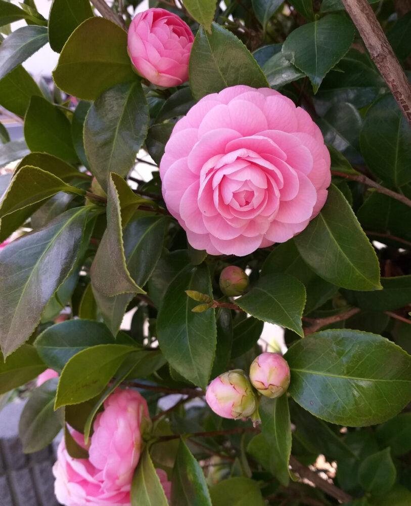 vivre à tokyo, floraison